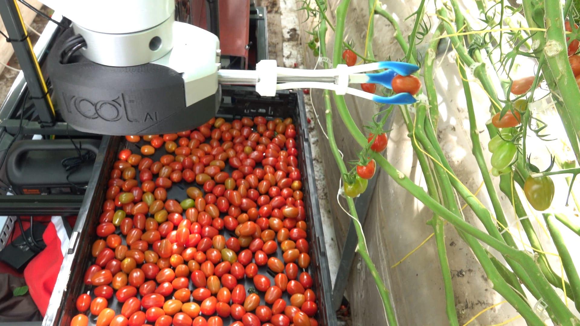 Як штучний інтелект допомагає фермерам у вирощуванні врожай - tech, news