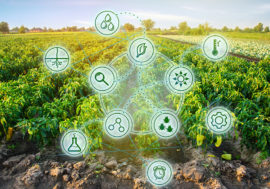 Як штучний інтелект допомагає фермерам у вирощуванні врожай