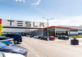 Екоактивісти програли Tesla: компанія вирубає 92 гектари лісу, щоб побудувати завод під Берліном