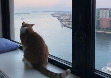 Як я зекономила тисячі доларів, подорожуючи по США та доглядаючи за будинками й  кішками