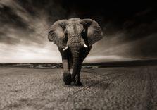 Правила слонів: 5 кроків до прогресу в житті та роботі