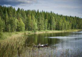 10 найбільш екологічно чистих країн світу на думку експатів