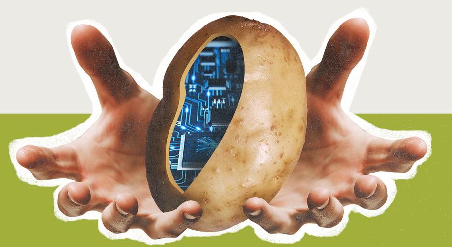 «Копаючи картоплю, ви час від часу викопуєте ту, яку садив ще ваш батько і дід. Це legacy-код». Пояснюємо ІТ-терміни на прикладі садіння картоплі - tech, developers, news, career