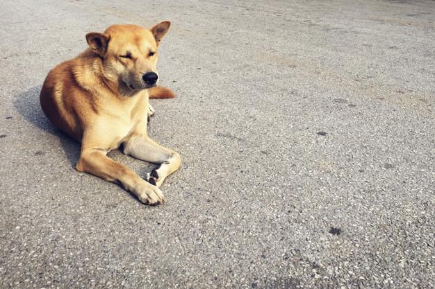 Вбити чи любити: безхатні тварини на вулицях міст - community, news, zhinky