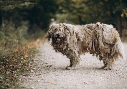 Вбити чи любити: безхатні тварини на вулицях міст